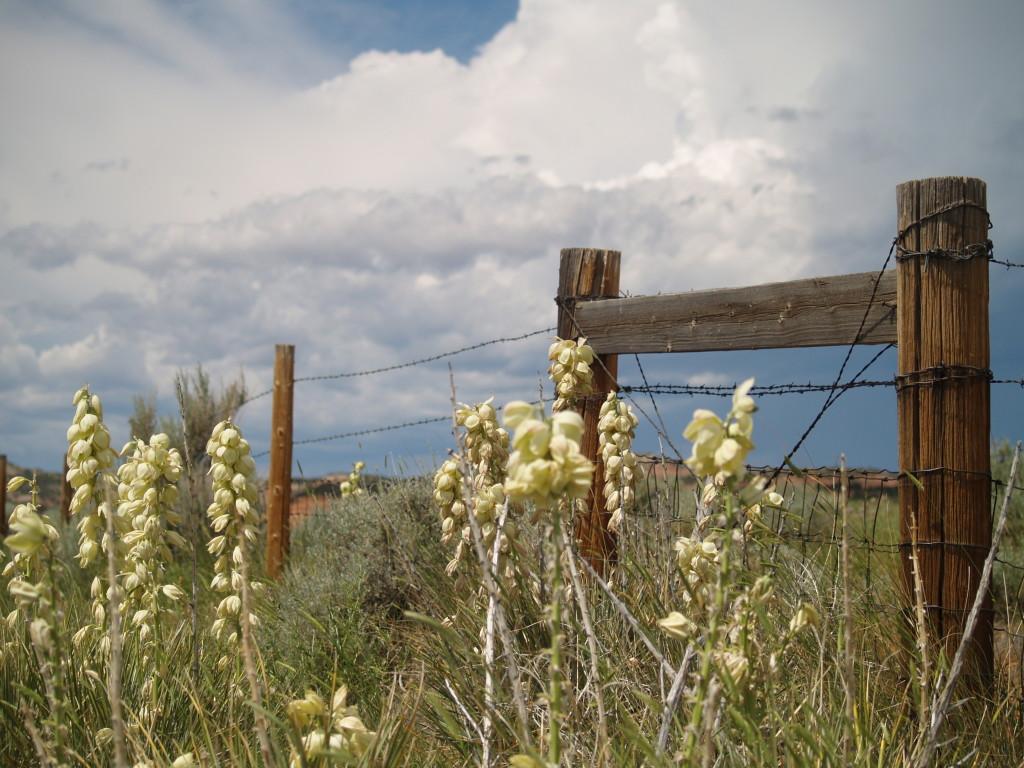 yucca fence
