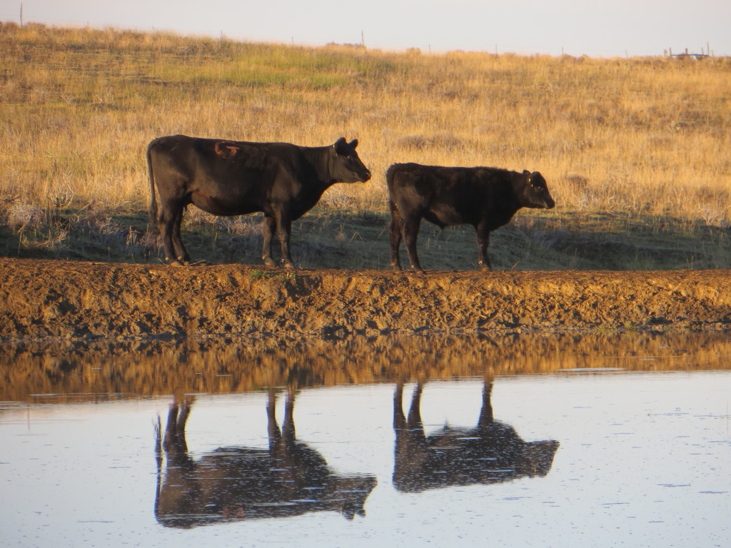 pair reflection