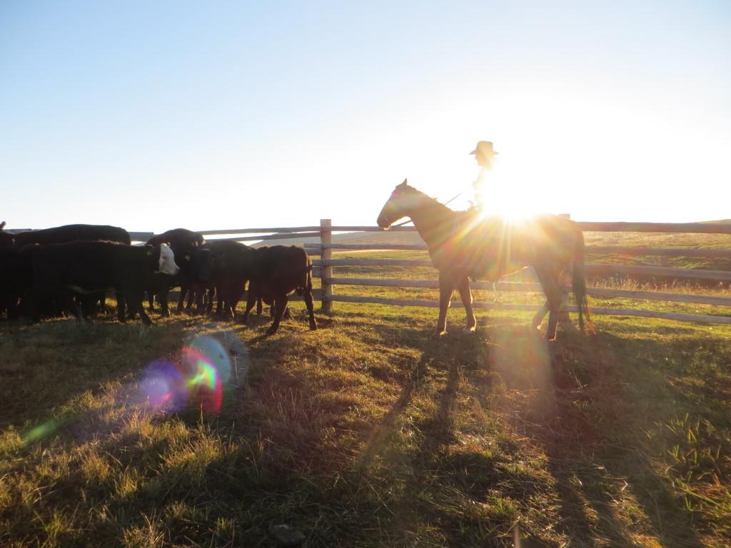 sunshine cowboy