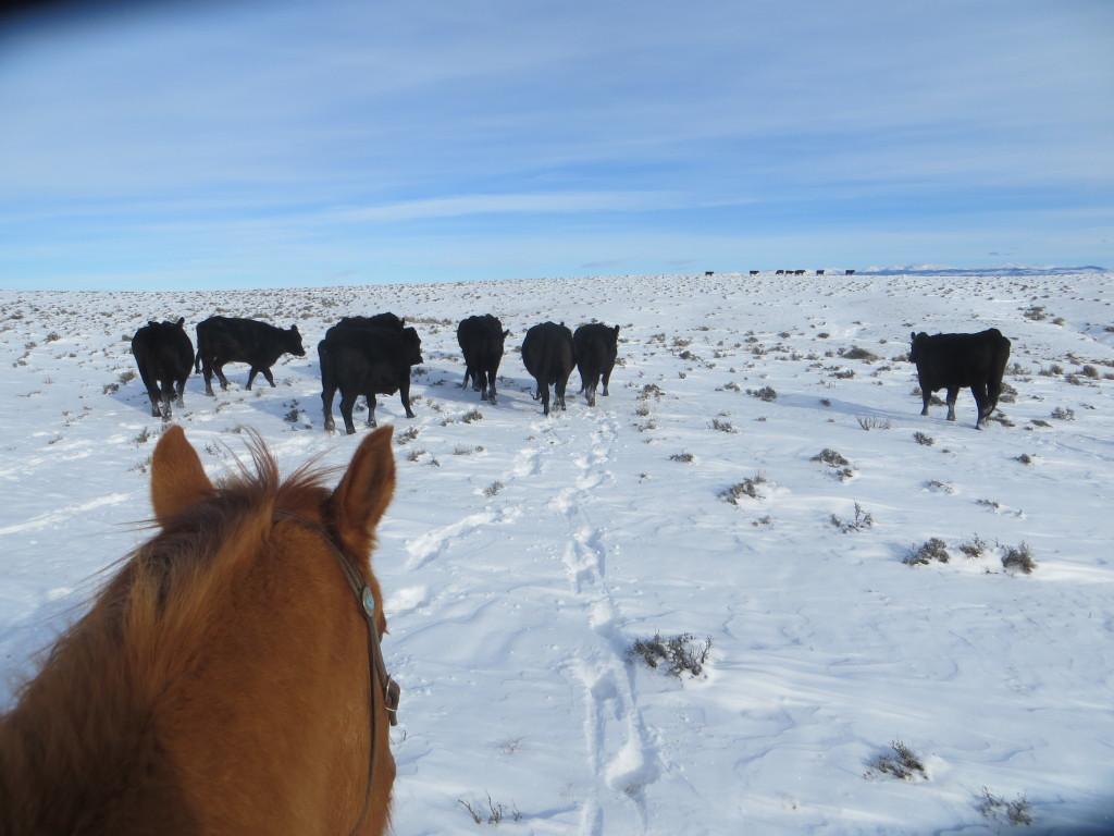 snowy gather