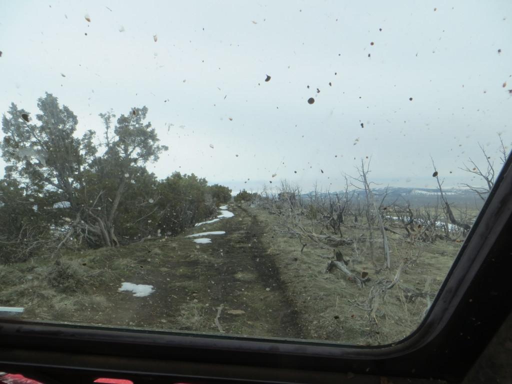 Rhino windshield