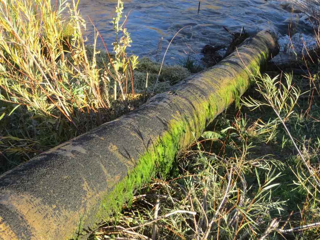 dam log 4