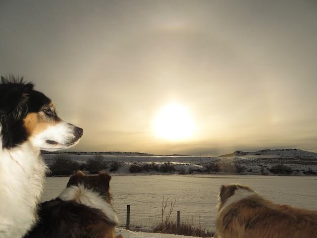 sundog2