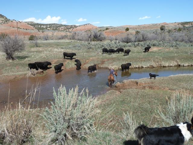 bulls2