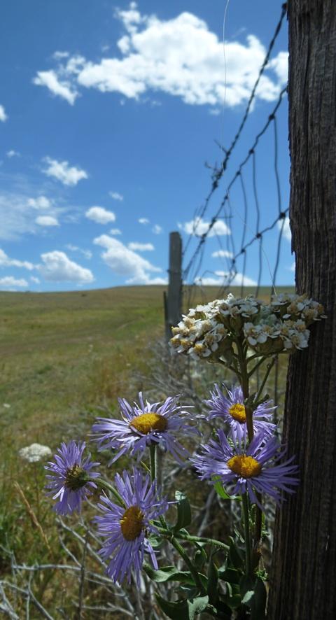 fenceflowers