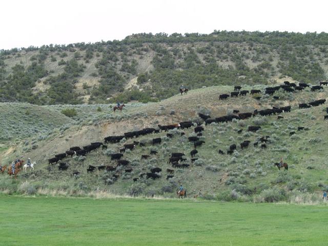 sidehill2