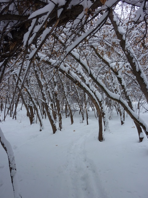 snowarbor