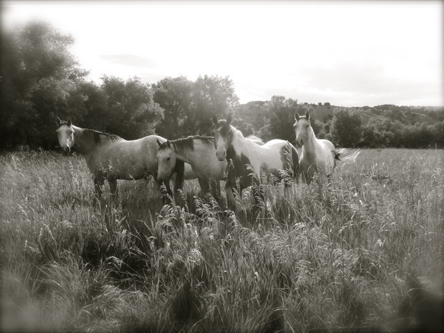 tullyhorses