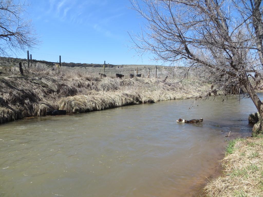 swim creek