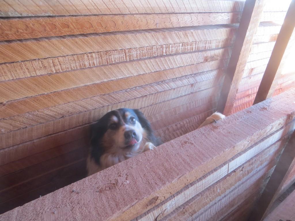 stuck dog