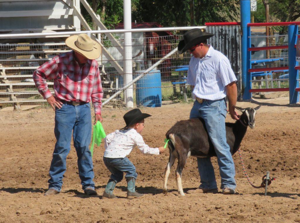 goat untying