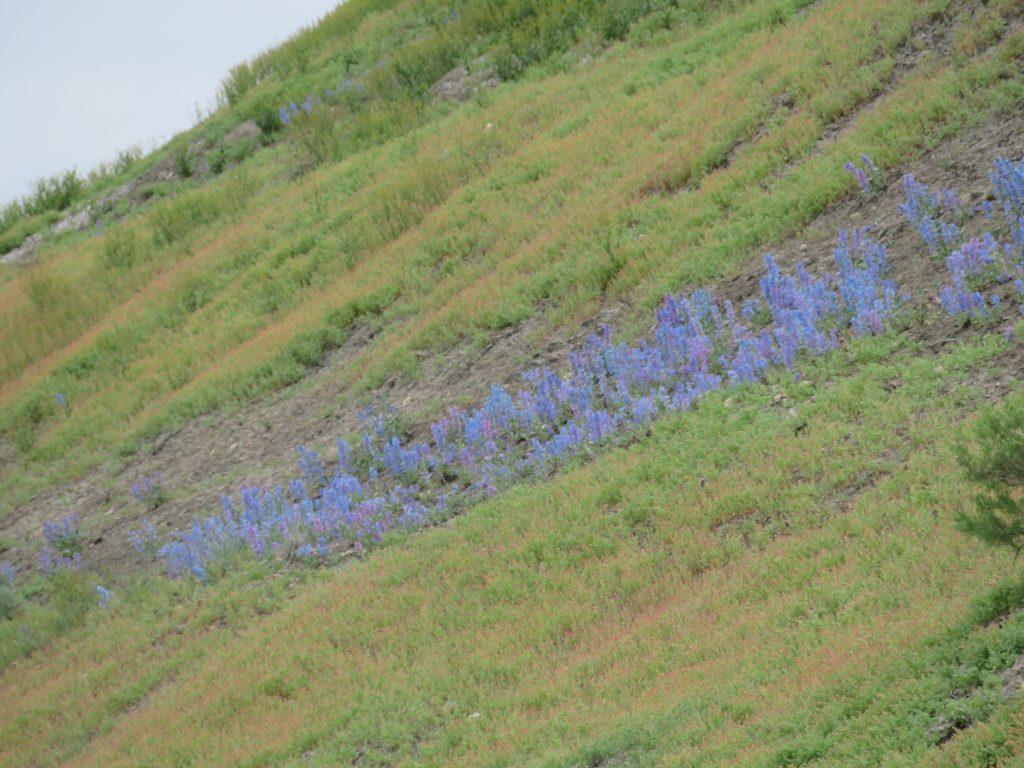 bluebell hill