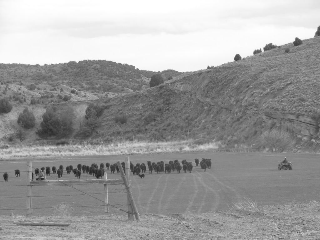 ranch course 5