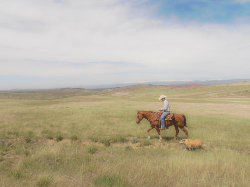 cowboy and his dog