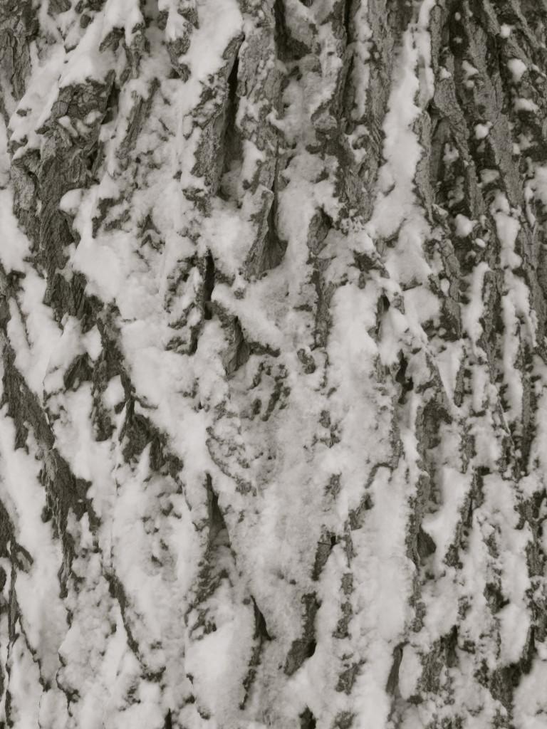 snow on cottonwood