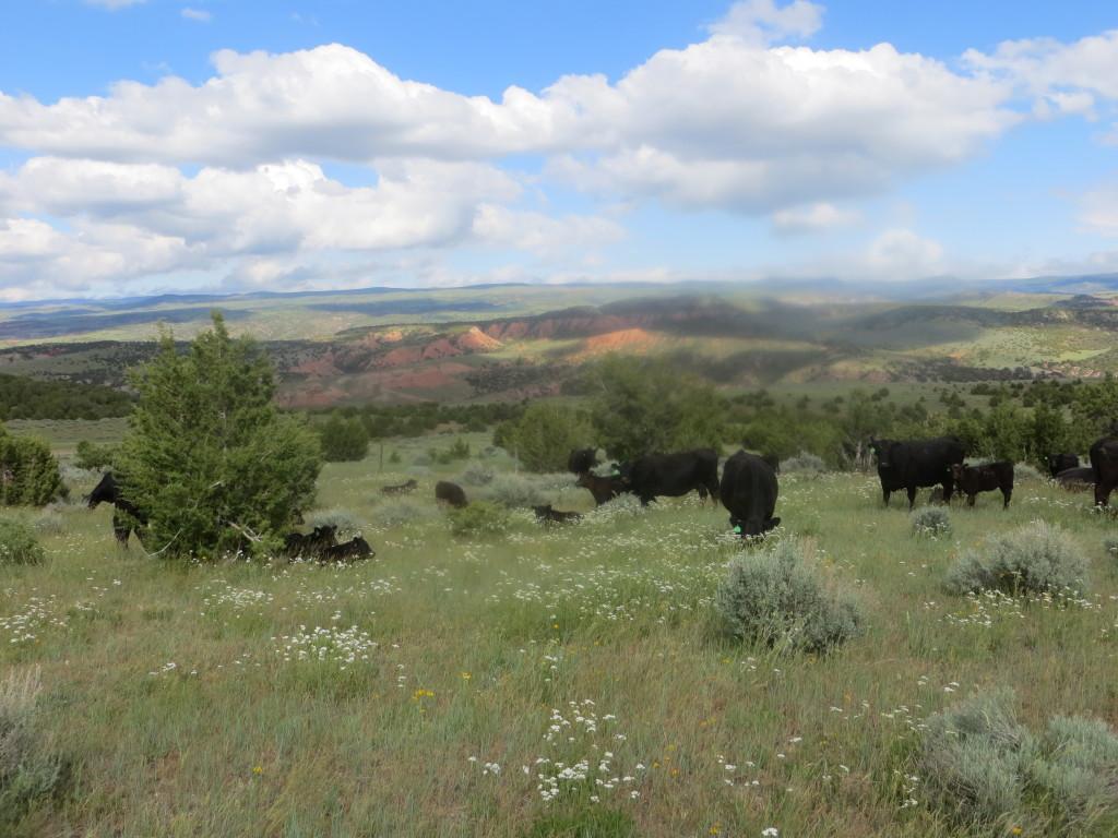 mills pasture