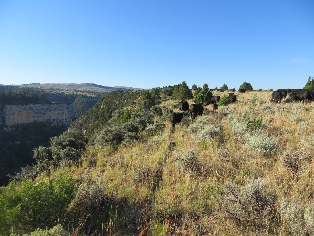 otter creek canyon