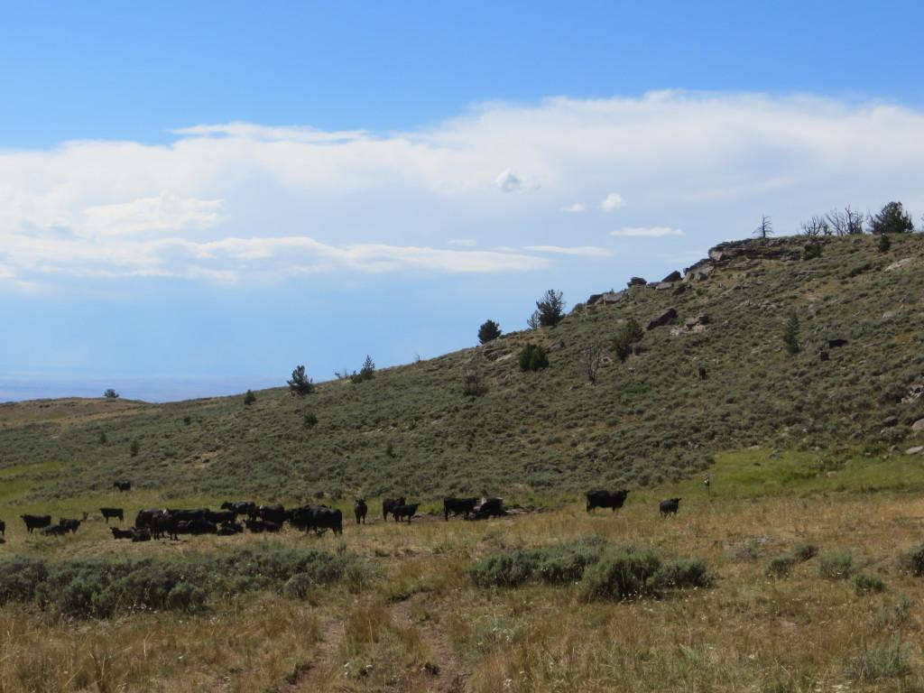 mt pasture