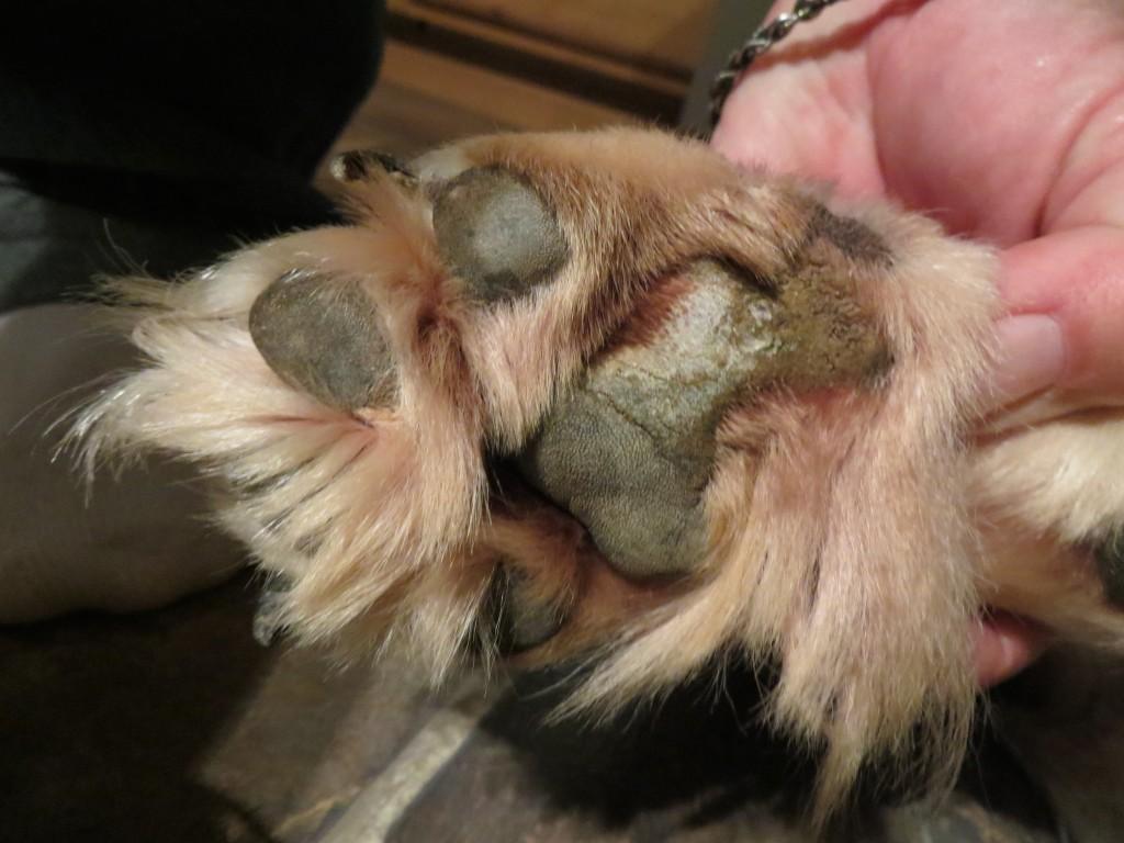 Lucas' paw