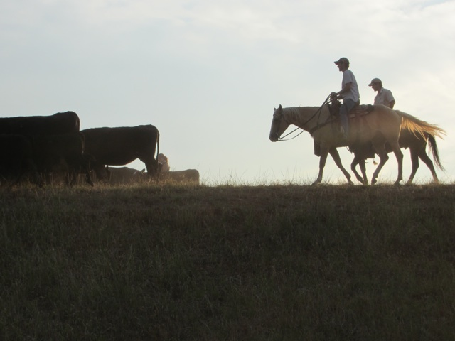 2cowboys