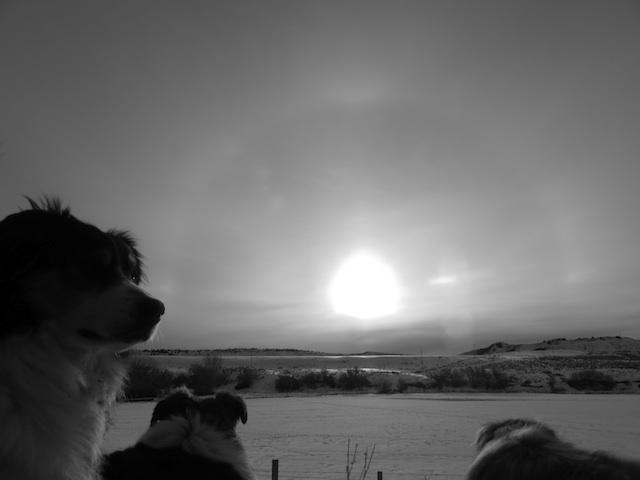 sundog1