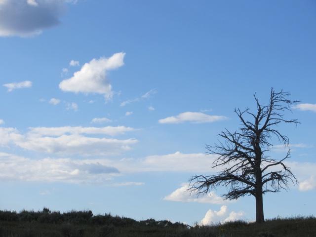 treesil