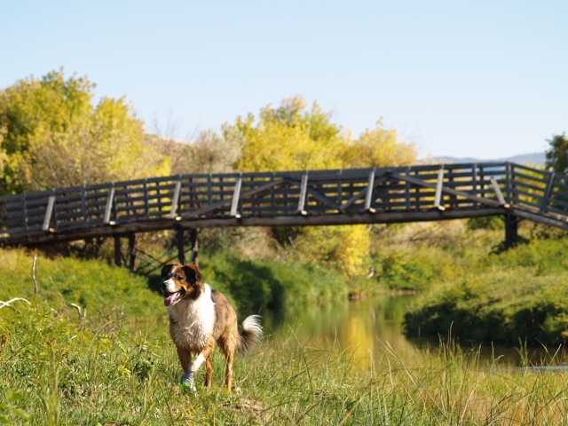 Bridge-dog