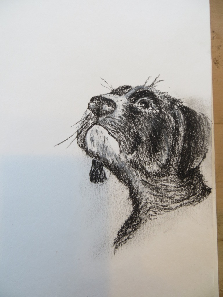 charcoal puppy