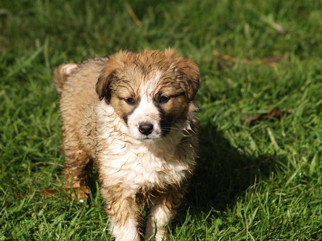 wetdog.jpg