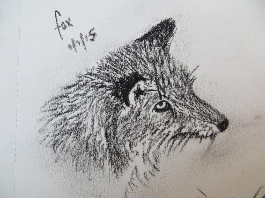 charcoal fox