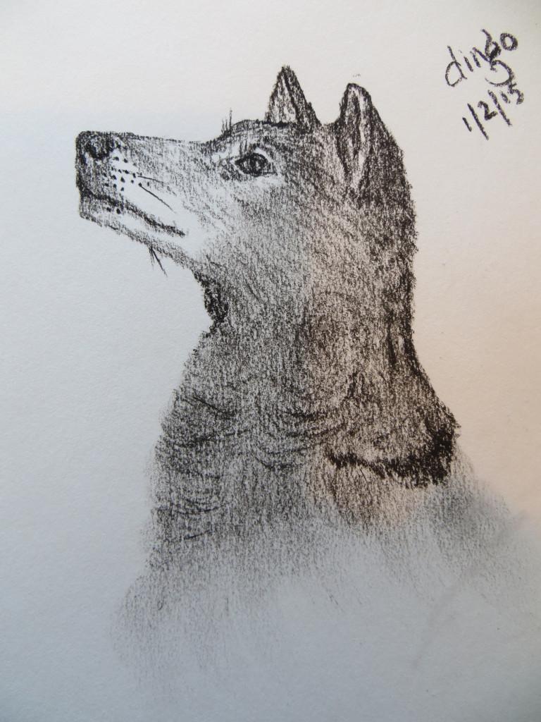 charcoal dingo