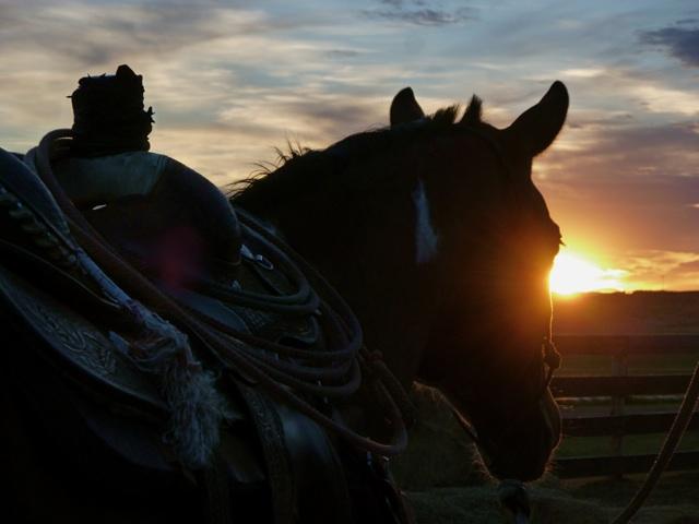 horsehalo