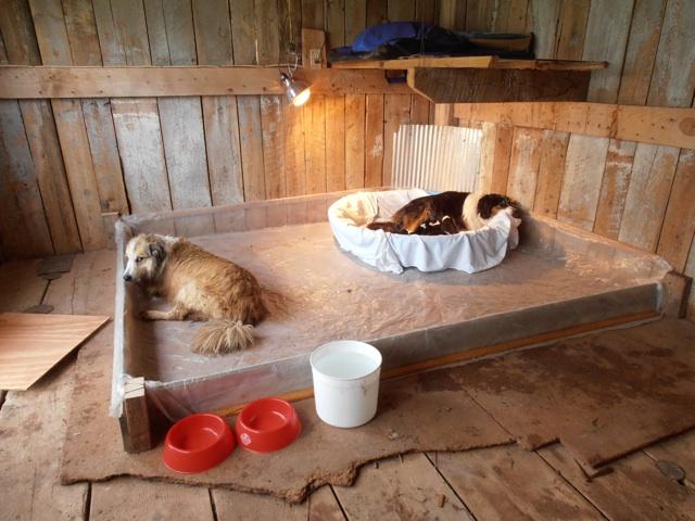 The Puppy Coop Is Open