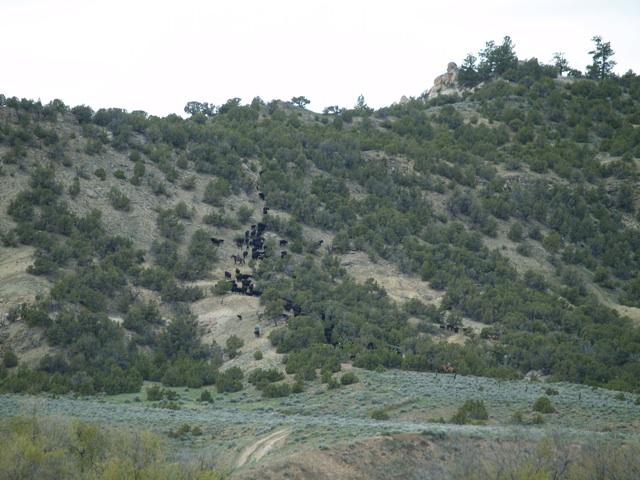 sidehill4