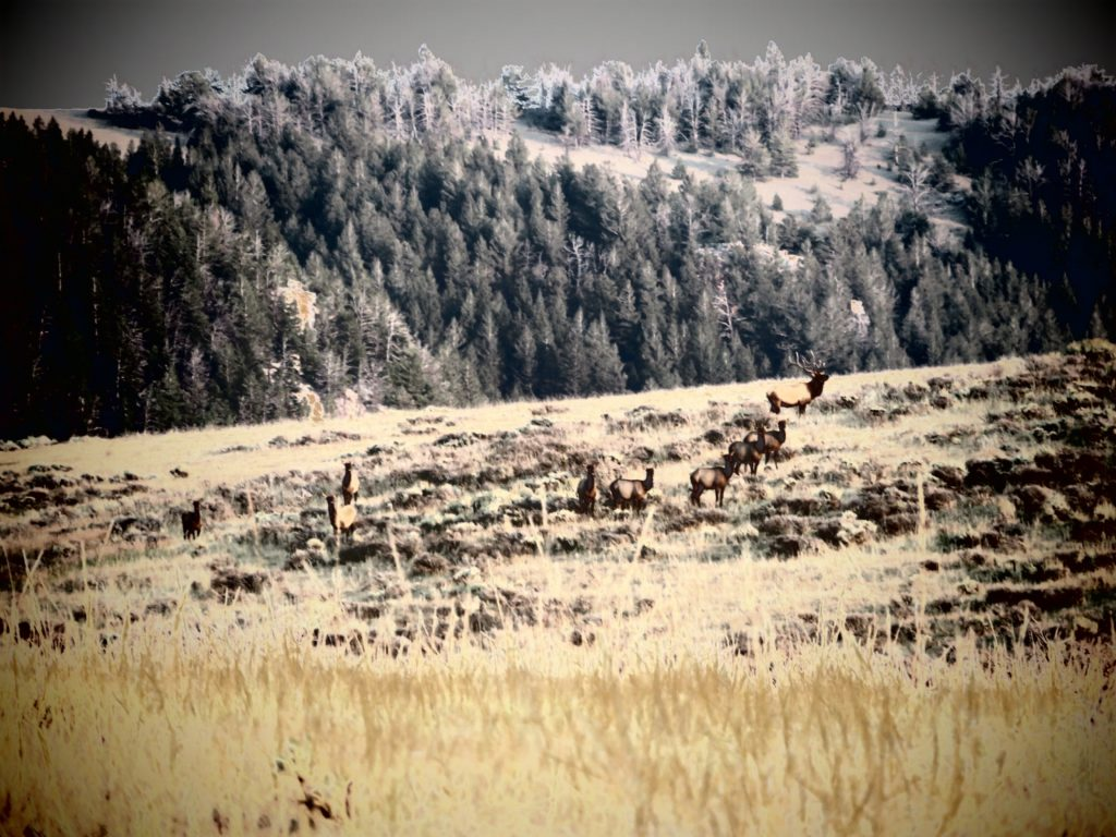 artistic elk