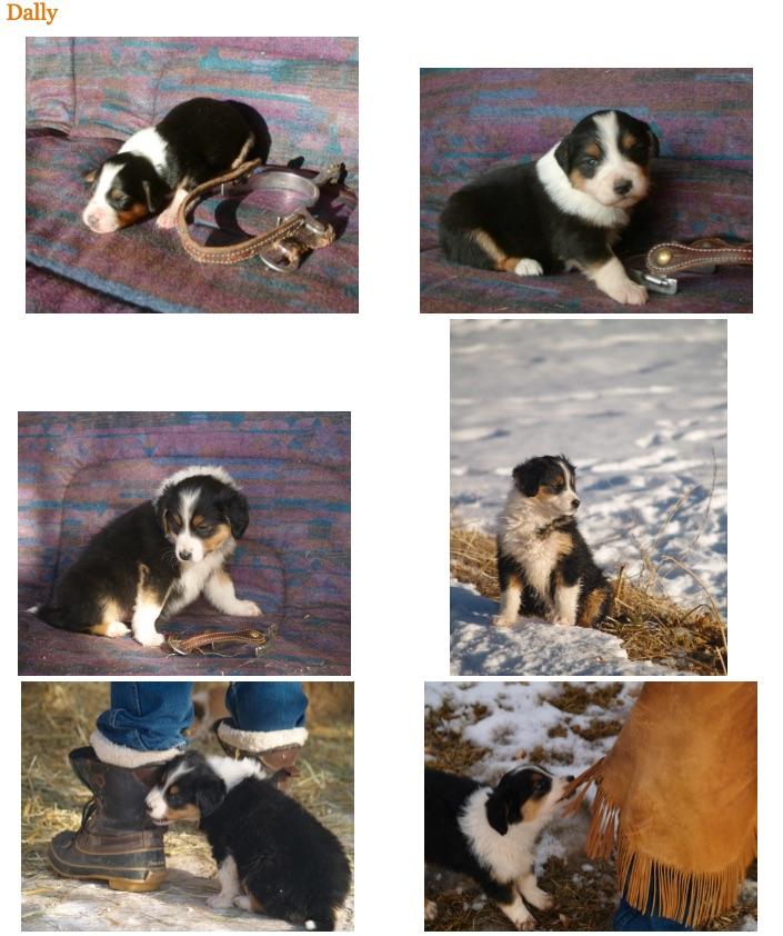 puppygirl